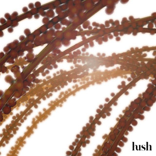 Hush Fill Seeker beauty product